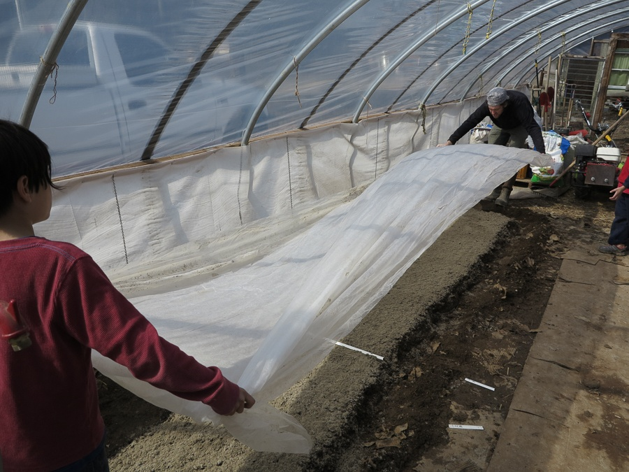 Covering the seedling bed with a seedling sheet.